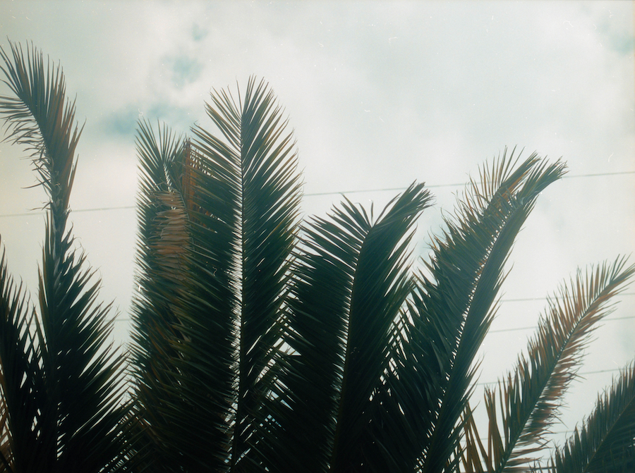 Palm-trees-emptiness